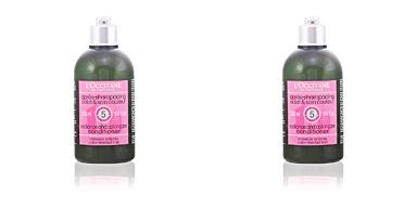 Protección cabellos teñidos AROMACHOLOGY après-shampooing éclat&couleur bouteille L'Occitane